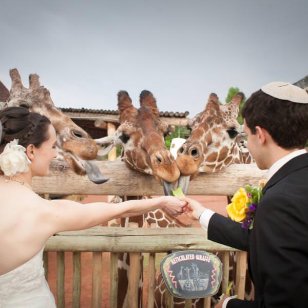 Tiffany and Jacob's Cheyenne Mountain Zoo Wedding