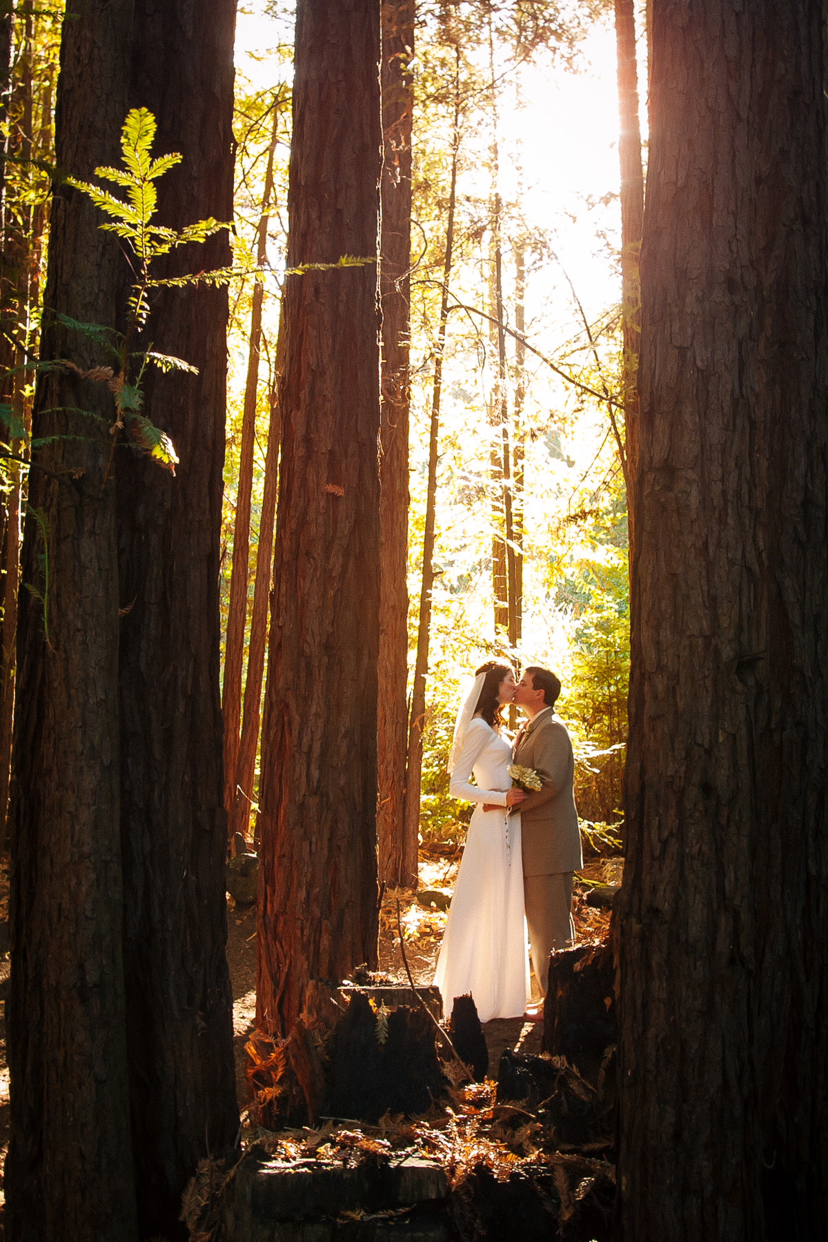 Bride and groom kiss in Redwood grove